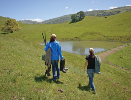 Bay Area Monitor Article Highlighting Cattle Ponds